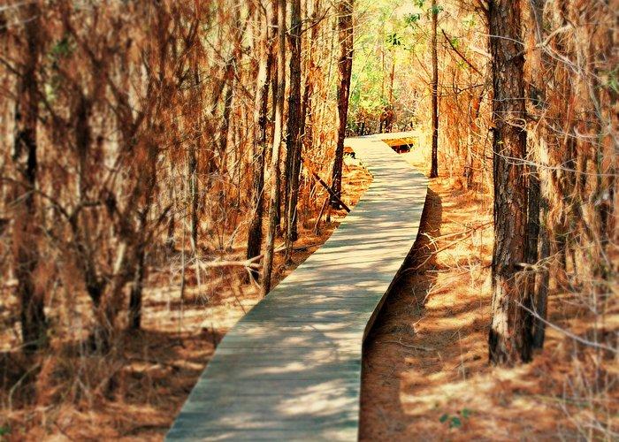 Off season strolling on a lovely woodland boardwalk