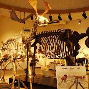 動物の化石や標本が充実していて見ごたえ十分でした。