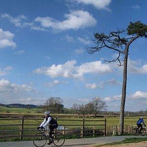 Cyclists enjoying the ride