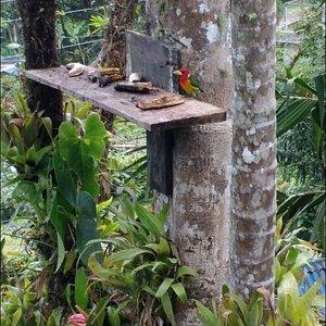 Lomazul, excelente lugar para el avistamiento de aves, diversidad asegurada. 🐦