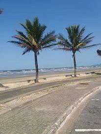 Muitos coqueiros na beirada do mar...