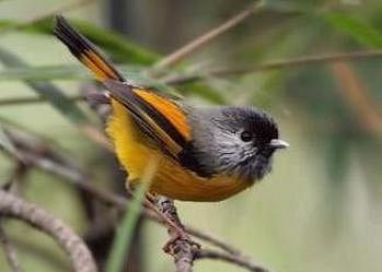 Birds at Gajoldoba