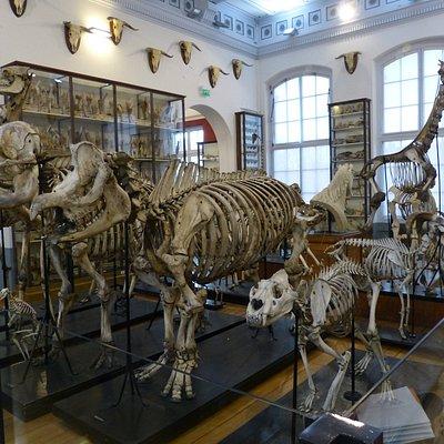 Collection de squelettes