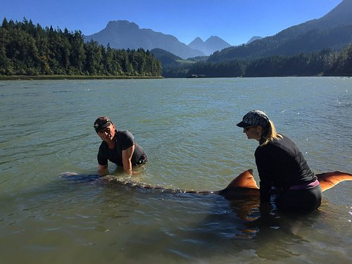 Releasing a Canyon Sturgeon with a beautiful back drop