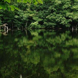 入口から遊歩道を歩いて少し奥にある大きな池です