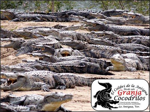 Foto principal visita laguna de reproducción.