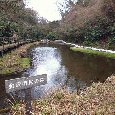 金沢市民の森のひょうたん池