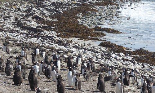 Lower half on the Elephant Beach Penguin Colony