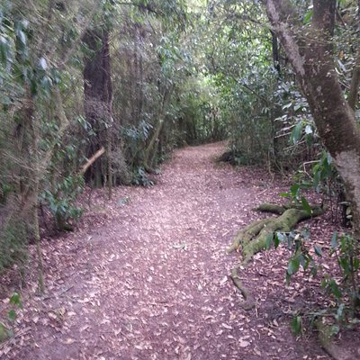 Quiet - except for the sounds of birds - peaceful walkway in Talbot Forest..