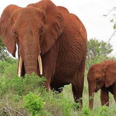 Eddison Safari Kenya