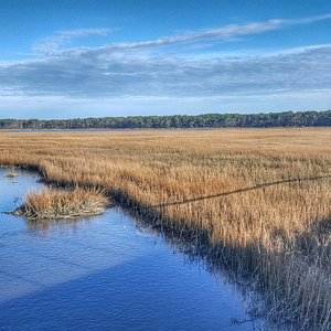 Wetland Complex - view from drive into Chincoteague NWR