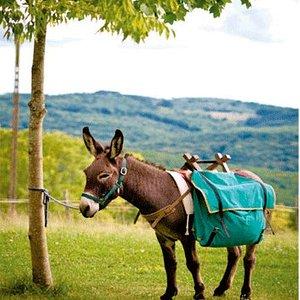 Pistou, le patriarche des ânes de la Gissonie