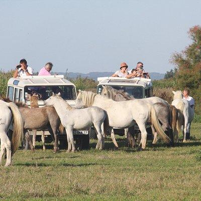 un authentique safari photo en Camargue avec accès exclusif dans un domaine de plus de 1000 hect