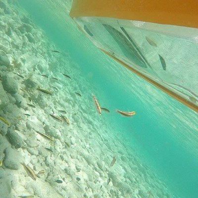 UNIQUE EXPERIENCE! CLEAR BOTTOM KAYAK