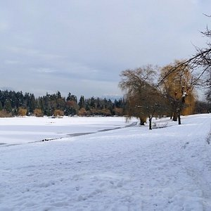 Lost Lagoon in winter white