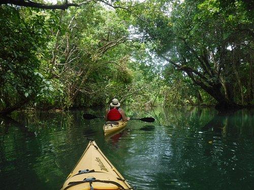 kayak thugh the jungle