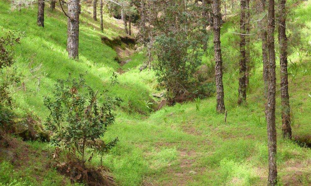 Forest around Las Raices