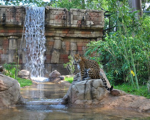Land of the Jaguar is more than jaguars! Opened in 2013, the exhibit showcases over 40 species o