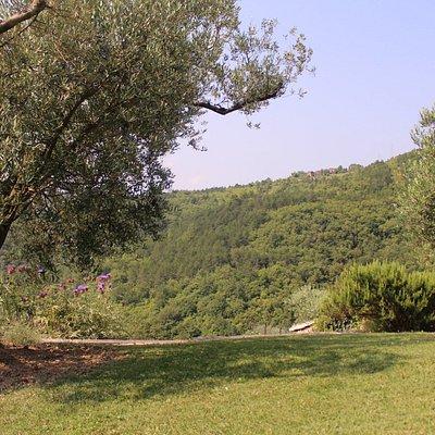 Das Anwesen mit alten Olivenbäumen