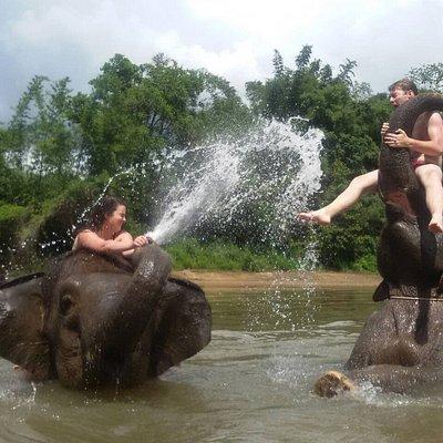 Extraordinary Elephant Day Trip