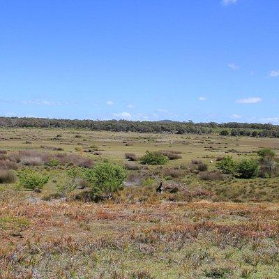 Forester Kangaroo Drive