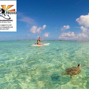 Eco tours by SUP Provo are the best way to explore the beauty here!