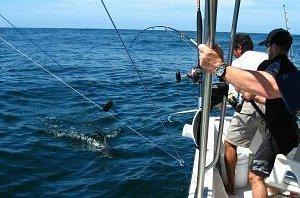 pesca del pez gallo