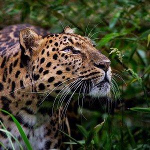 Explorando la Reserva Nacional Pacaya Samiria en busca de Jaguares