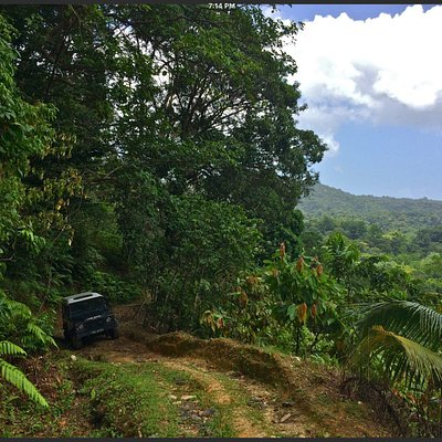 Caribbean Discovery Tours Land Rover trips.