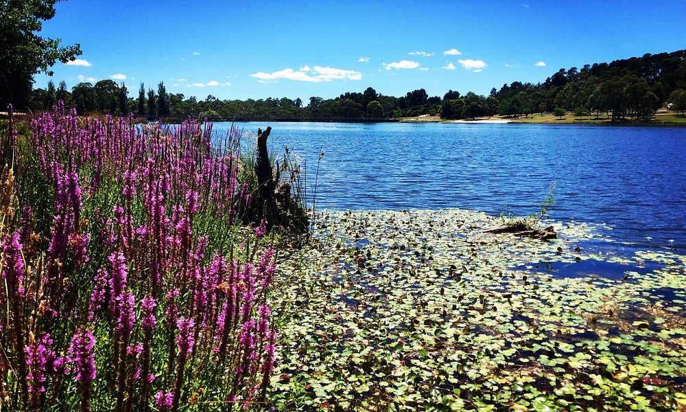Stunning lake good for family picnic  and just relax  and they also have a  cafe  to enjoy coffe