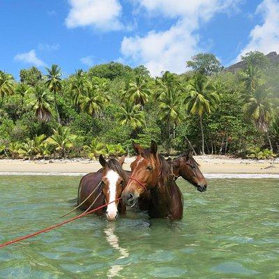 baignade avec les chevaux, plage de Anaho