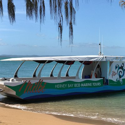 "The ""Milbi"" is butchulla for sea turtle. The only glass bottom vessel in Hervey Bay."