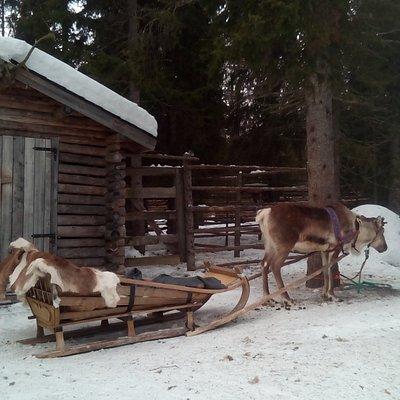 Balade en traineau de renne