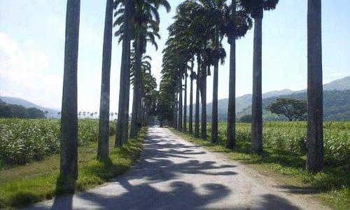 Paseo de las palmeras