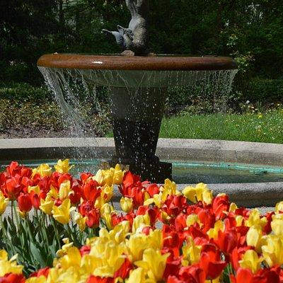 Tulpenblüte im Max-Reger-Park Weiden