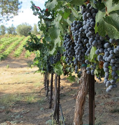 Some of our 2014 Cabernet