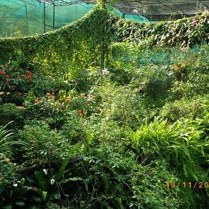 vegetationen-i-fjarilsparken.jpg?w=300&h=300&s=1