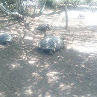 Centro de Crianza de Tortugas -