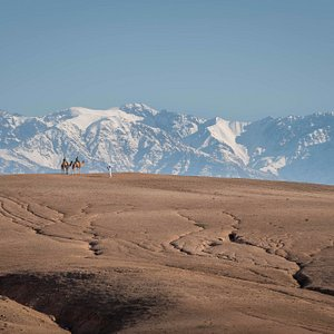Camel excursion in the Agafay Desert