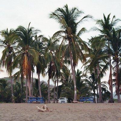 Palmengürtel