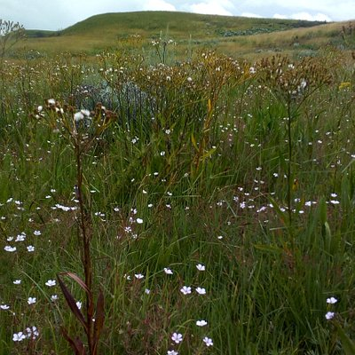 Local refer to the Kitulo plateau as the garden of God, while botanist have dubbed it the Sereng