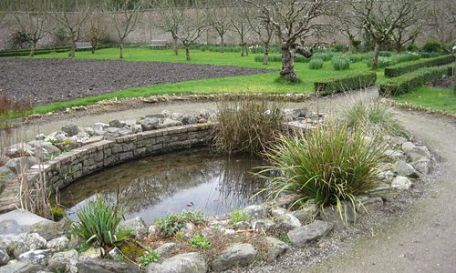 Pond and fruit trees in the walled garden at Llanerchaeron