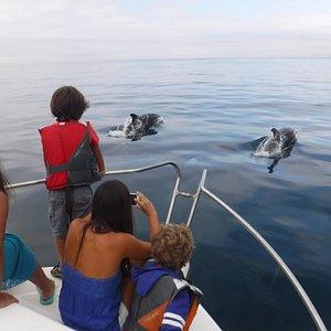 Passeio de Barco - Observação de Golfinhos