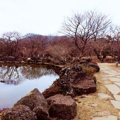 Pond/ garden