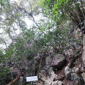 蛇穴の周りの木々