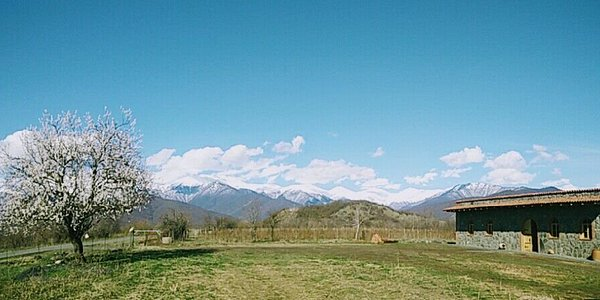 Winery and the mountains