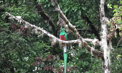 quetzale  i see you