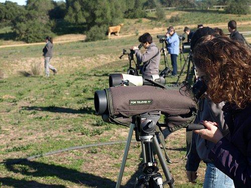 Birdwatching in Doñana area.