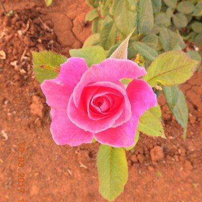 Flowers in the Rose garden