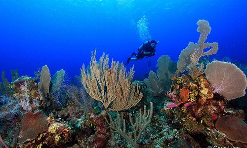 Hamanasi diver exploring the Belize Barrier Reef